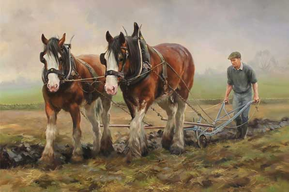 Shire horses ploughing in recent times